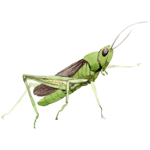 A cricket. Symbolizing the sound of crickets that you hear when there's nothing really happening.