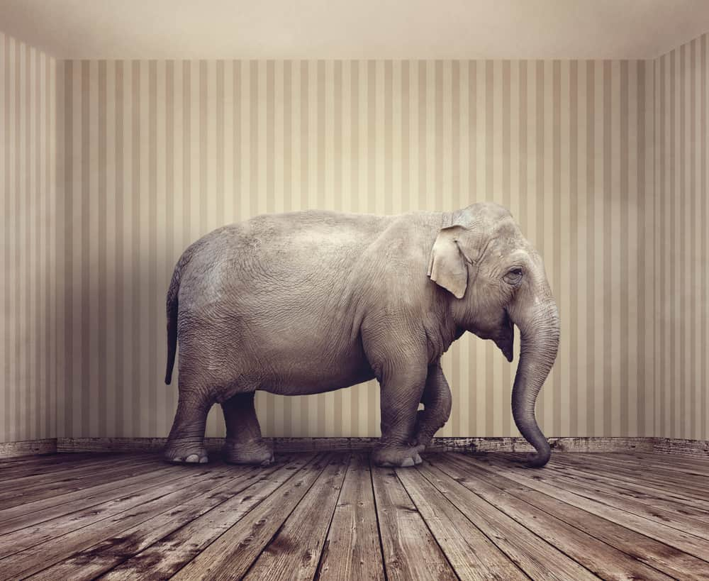 Picture of an elephant in a room, in reference to the Doordash Pay Model