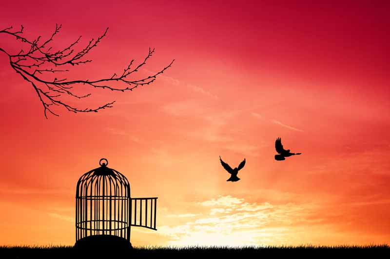Some would say Prop 22 means freedom for independent contractors (picture of open bird cage and birds flying free)