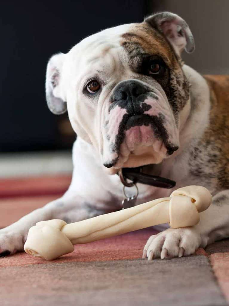 Be like this bulldog with a bone about your 1099